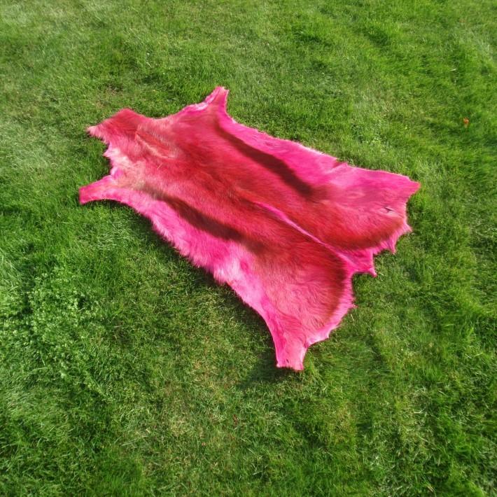 Springbok Roze